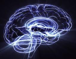 Ощущение удовольствия помогает мозгу думать и запоминать — ученые