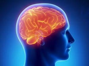 Мозг альтруистов и эгоистов имеет разную структуру — ученые