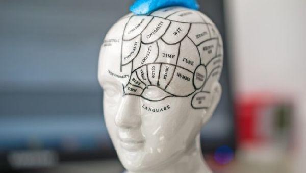 Определен участок мозга, принимающий «за нас» решения