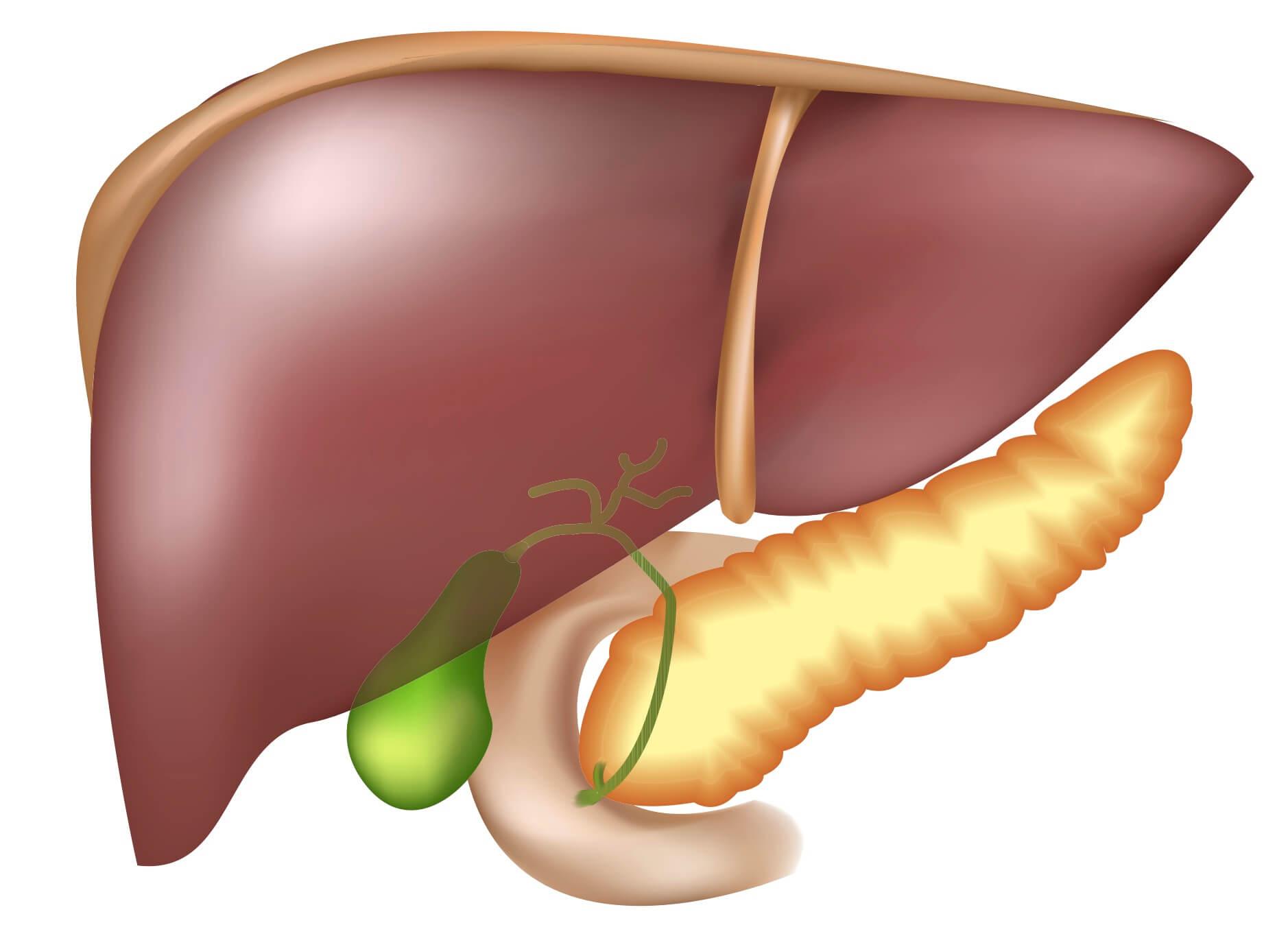 Болезни печени и их симптомы