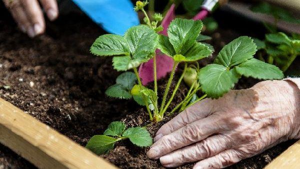 Прогулка по саду – лекарство для пациентов с болезнью Альцгеймера