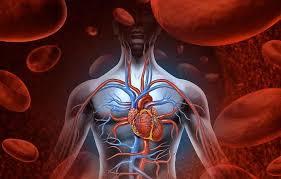 Малоподвижный образ жизни удваивает вероятность сердечно-сосудистых заболеваний у женщин