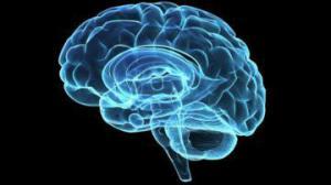Ученые разработали трехмерную карту нервных соединений головного мозга