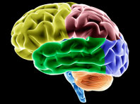 Протезы и системы, «прокачивающие» мозг, — новый многомиллионный проект