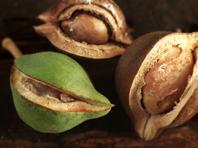 Исследователи нашли средство, останавливающее старение сосудов