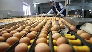 Употребление яиц снижает риск возникновения инсульта на 12%