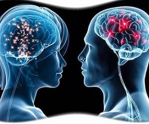 В мозге женщин и мужчин обнаружены новые различия