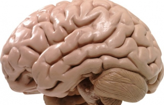 Болезни головного мозга после 40 лет