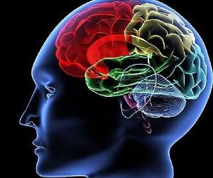Ученые выяснили, как восстановить мозг после инсульта
