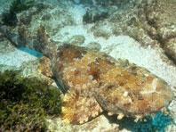 Акулы подсказали эффективный метод борьбы с болезнью легких