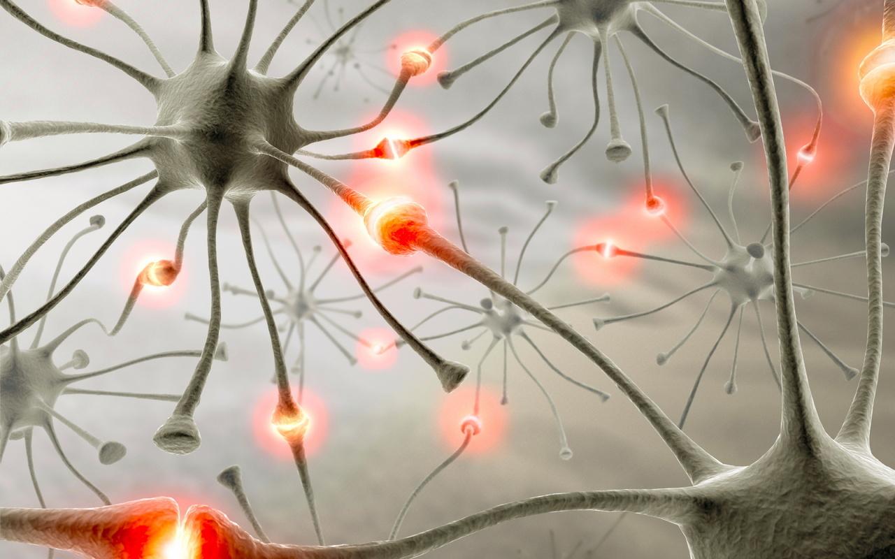 Ученые смогли превратить клетки кожи в клетки мозга