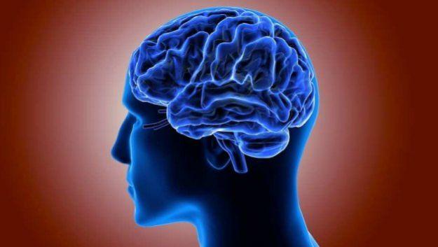 Структура мозга предопределяет личность человека