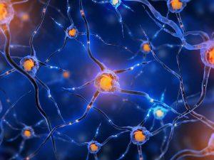 Обнаружено вещество, замедляющее старение нервных клеток