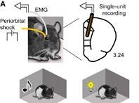 Ученые выяснили, как мозгу удается сохранять нужные воспоминания