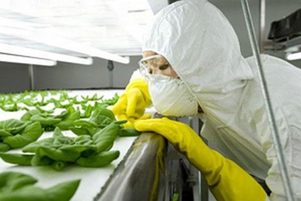 Генетически модифицированных людей будут созданы в США