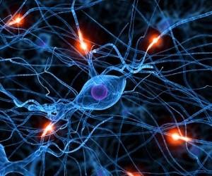 Рассеянный склероз заморозят стволовыми клетками
