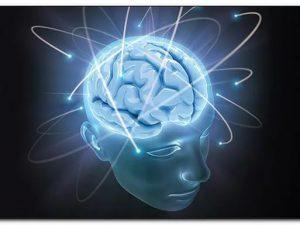 Открыт механизм одного из ключевых процессов развития мозга