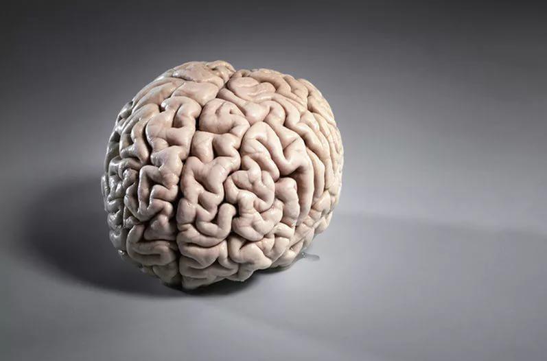 Шутки головного мозга