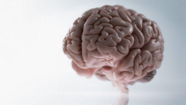 Определены ключевые различия в мозге мужчин и женщин