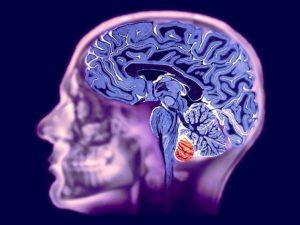 Разработана методика определения биологичесокого возраста мозга