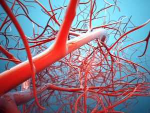 Ученые нашли возможность выращивать сосуды в сердце