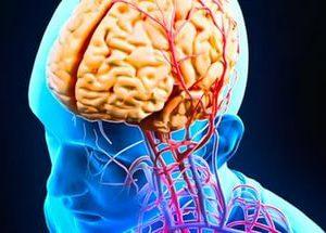 Чем дольше продолжаются активные нагрузки на мозг, тем больше шансов предотвратить возникновение слабоумия