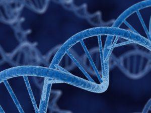 Открыты 40 новых генов, отвечающих за умственные способности