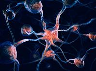 Специалисты поняли, как помочь людям с повреждениями мозга