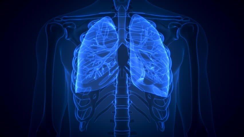 Как очистить легкие: очищение легких после курения