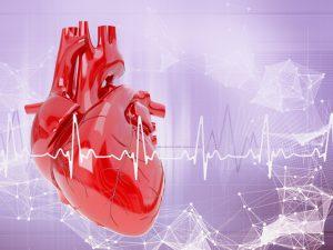Ученые составили белковый атлас человеческого сердца
