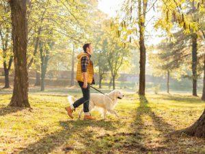 Собаки полезны для сердца и сосудов