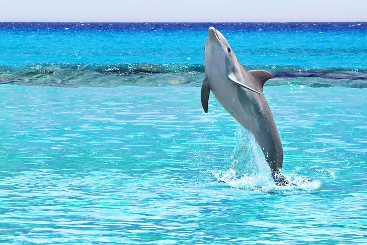 Признаки болезни Альцгеймера обнаружили у дельфинов