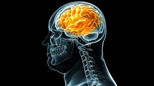 Ученые выяснили, как склонность к перееданию зарождается в мозге