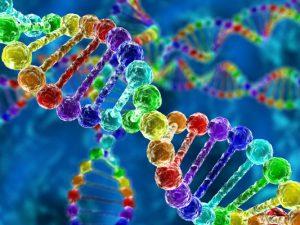 Обнаружен ген, защищающий от сердечных заболеваний