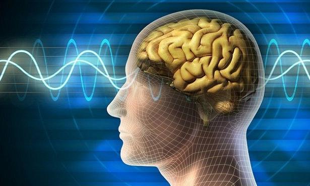 Ученые узнали, как формируется память