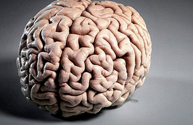 Найден простой способ значительно омолодить мозг