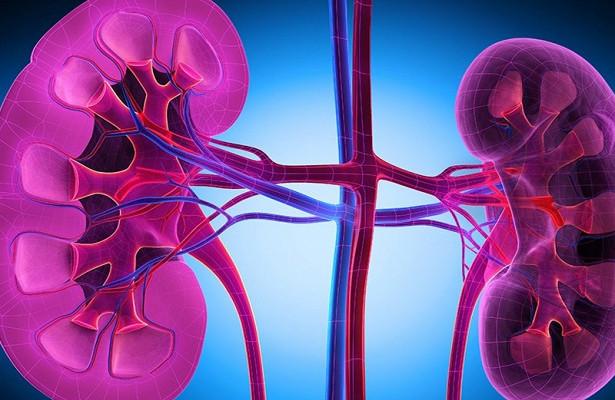 Склеротизация почечных нервов избавляет от гипертонии