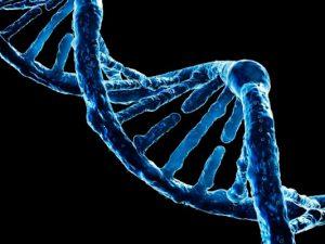 Новый генный тест лучше предсказывает развитие сахарного диабета