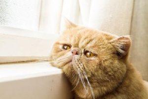 Обнаружено, что домашние животные лечат сердце