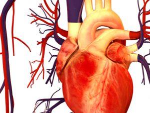 Учёные назвали омолаживающую сердце и сосуды пищевую добавку