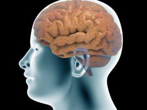 Новые нервные клетки появляются под действием тока мозговой жидкости