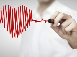 Биологи научились останавливать сердце