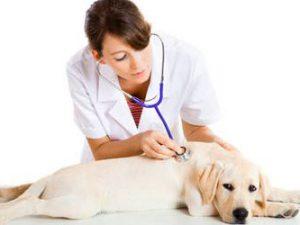 Ветеринар на дом