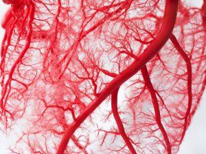 Созданы сосуды-имплантаты, обеспечивающие рост естественной ткани