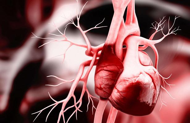 Найден механизм развития сердца у зародыша