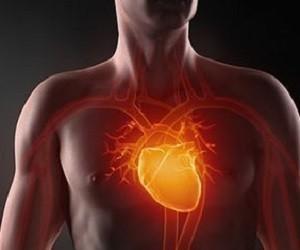 5 лекарственных трав для очищения сосудов, нормализации давления и улучшения сердечного ритма