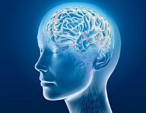 Как помочь мозгу при информационных перегрузках