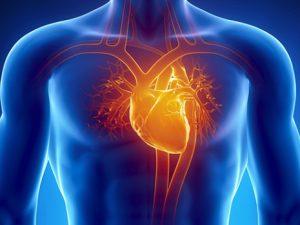 Здоровье сердечно-сосудистой системы зависит от образа жизни человека