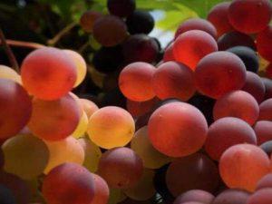 Врачи назвали эффективную ягоду для профилактики диабета