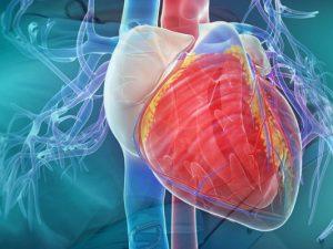 Создан пластырь, восстанавливающий сердечную ткань